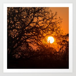 Sultry sun setting behind the sausage tree Art Print