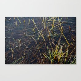 pool of water Canvas Print