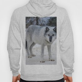 Lone wolf of the Canadian Rocky Mountains Hoody