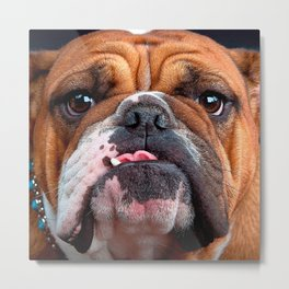 Bulldog English Bad Face Metal Print