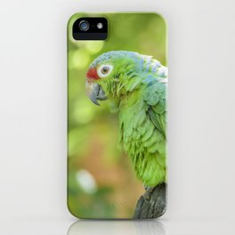 Tropical Parrot at Zoo, Guayaquil iPhone Case