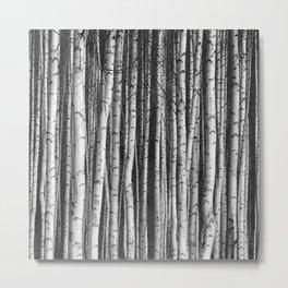 Birch || Metal Print