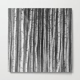 Birch    Metal Print
