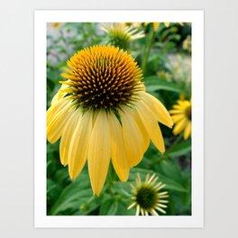 Yellow Echinacea/Coneflower Art Print