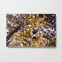 Purple Canopy Metal Print