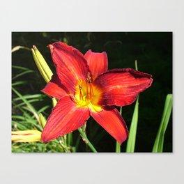 Flower Pic 11 Canvas Print