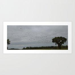 Black birds at flight Art Print