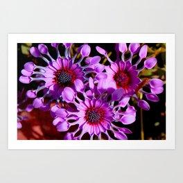 Purple Whirligig - Phoenix Art Print