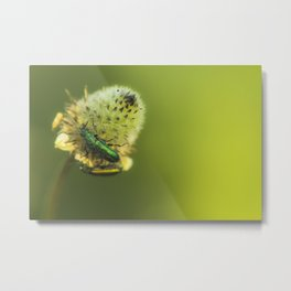 meadow lifes Metal Print