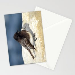Black Phoebe Stationery Cards