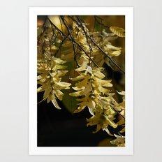 Lindenblüten Art Print