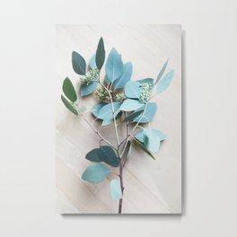 eucalypts branch Metal Print