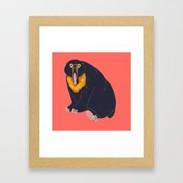 Sun Bear Study 1 Framed Art Print