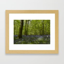 Bluebell Glade 2 Framed Art Print