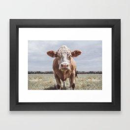 Animal Photography | Highland Cow Portrait Photography | Farm animals Framed Art Print