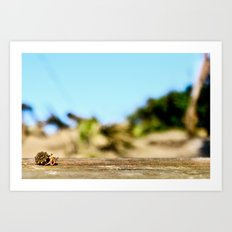 Journey of the Hermit Crab Art Print