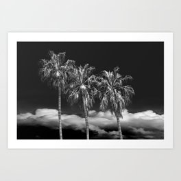 Palm Trees in Black and White on Cabrillo Beach Art Print