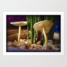 Mushrooms in the Areca Palm Art Print