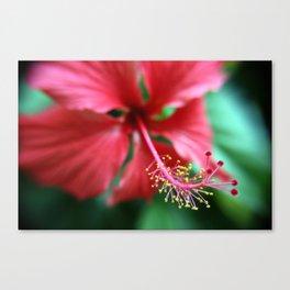 Jamaican Blossom Canvas Print