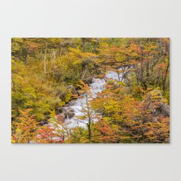 Colored Forest Landscape, Patagonia - Argentina Canvas Print