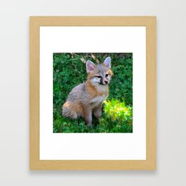 Little Grey Fox Framed Art Print