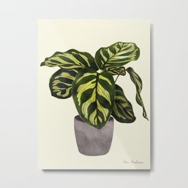 calathea botanical interior plant Metal Print