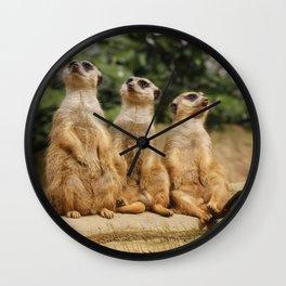 Meerkat_2015_0121 Wall Clock