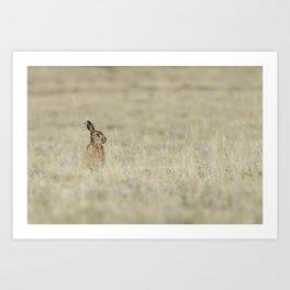 Brown hare Art Print