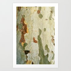 London plane tree Art Print