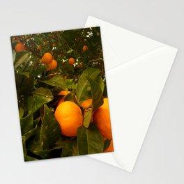 Orange Tree Stationery Cards