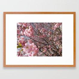 London blossoms Framed Art Print