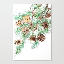 pine cones watercolor Canvas Print