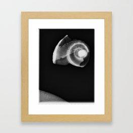 Shell in Section II Framed Art Print