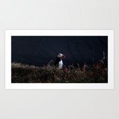 puffin Art Print