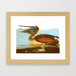 Brown Pelican Illustration Framed Art Print