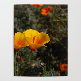 poppies will put you to sleep Poster