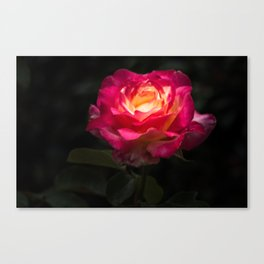 A Rose for Love Canvas Print