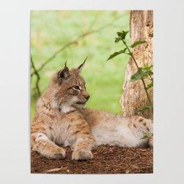 Lynx Lynx Poster