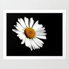 Small meadow flowers Art Print