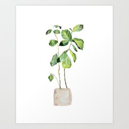 Fig tree watercolor  Art Print