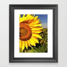 Sunflower fields forever Framed Art Print