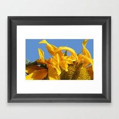 Facing the Sun Framed Art Print