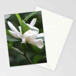 Gardenia Stationery Cards
