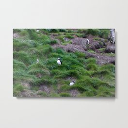 Puffin Meeting2 Metal Print