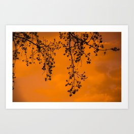 warm late afternoon Art Print
