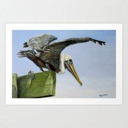 Pelican Wings Art Print
