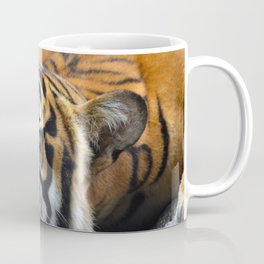 Tiger, Tiger Fast Asleep Coffee Mug