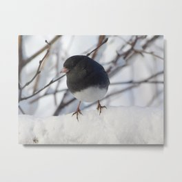 Wintery Junco Metal Print