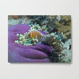 Palau anemone fish Metal Print