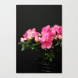 Flower - Pink & Black Canvas Print